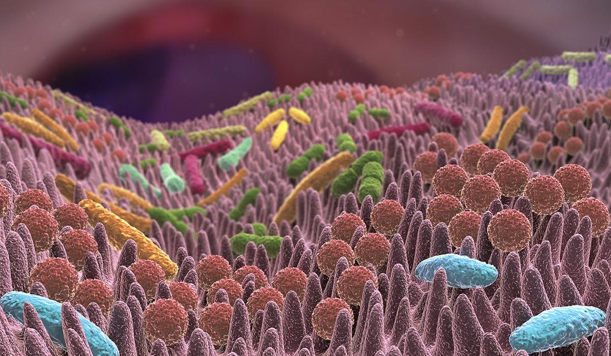 Antibiotika: Der Störenfried für unsere Darmflora